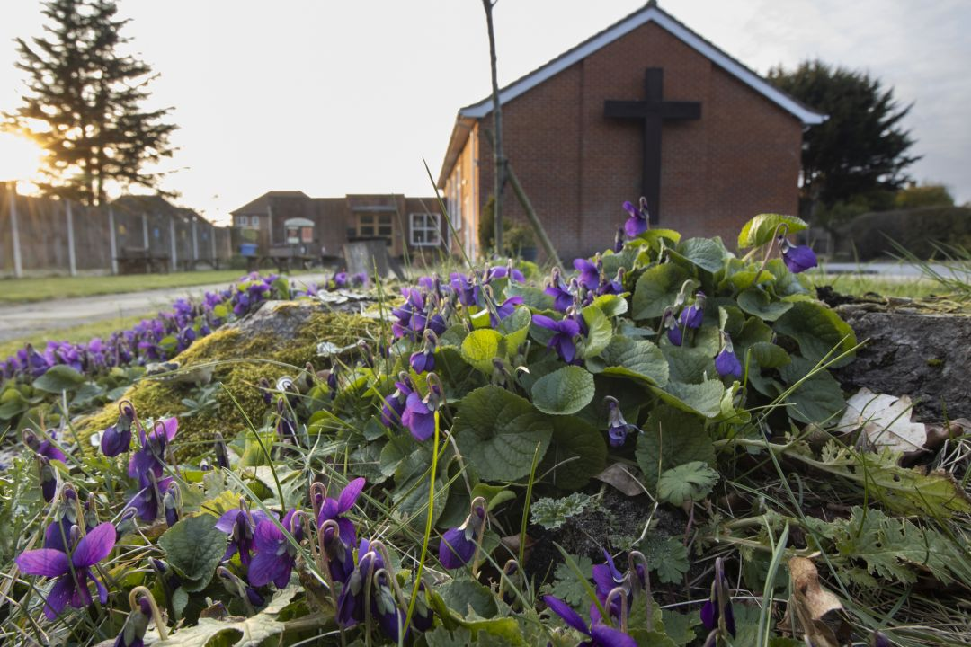 church violets 1 720